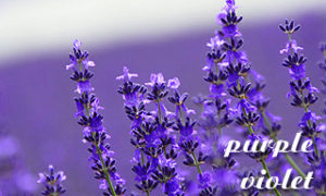 色のコラム 紫について