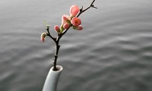 ブル子ちゃんのコラム 春☆桜色