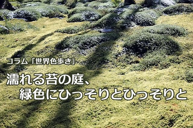 濡れる苔の庭、緑色にひっそりとひっそりと